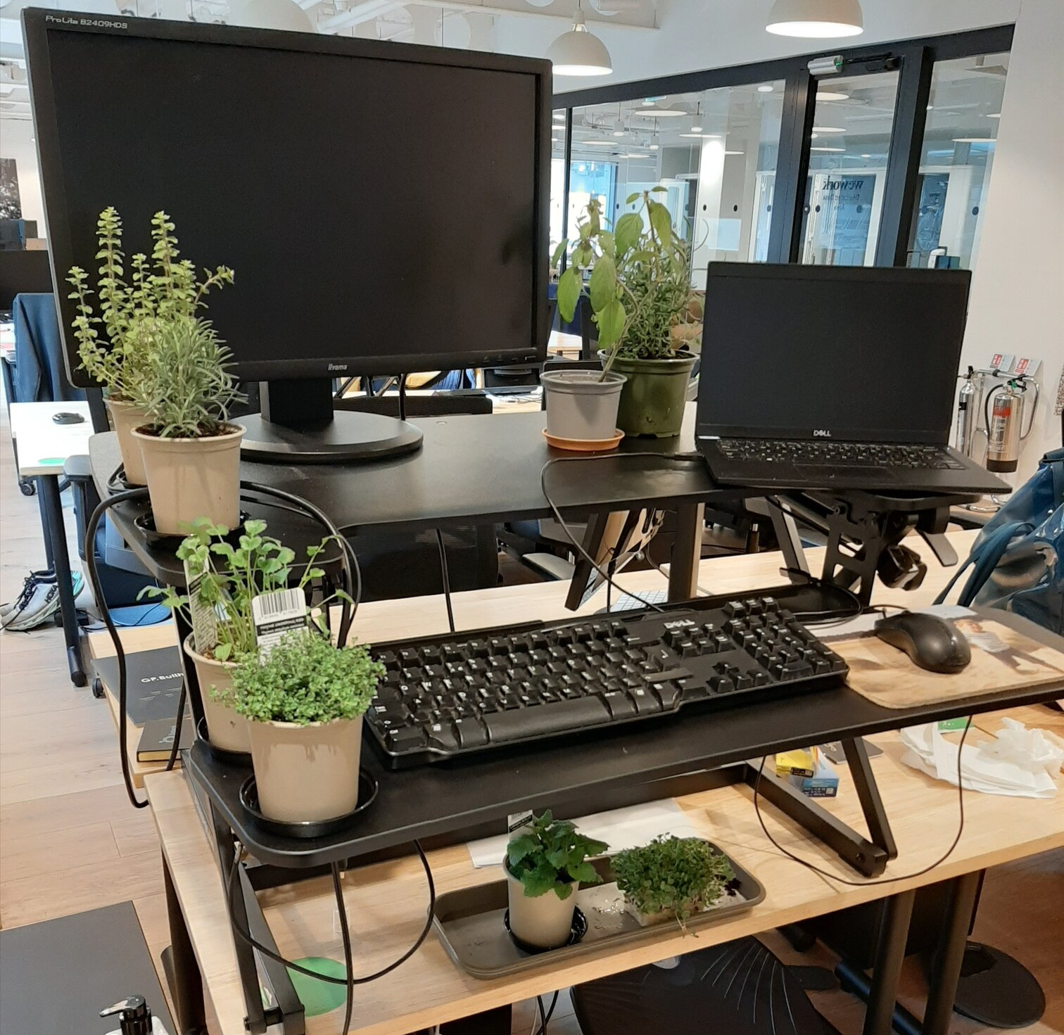 add plants to your home office