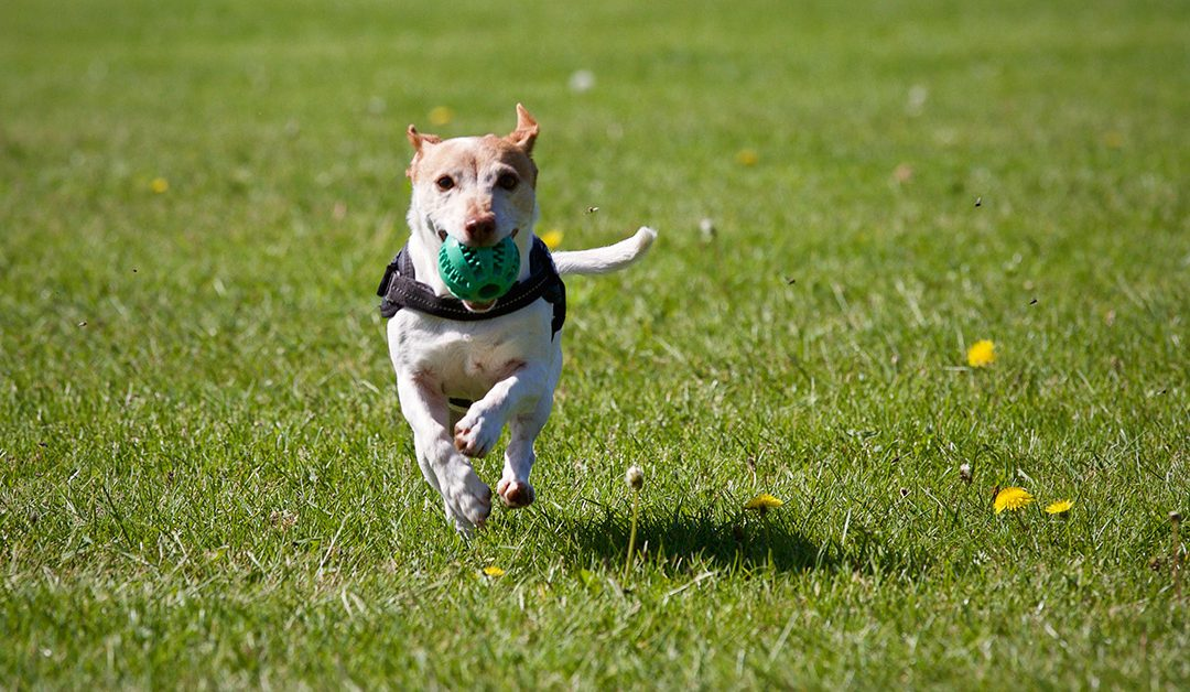 Who Let The Dogs Out? Interview With A Dog Trainer